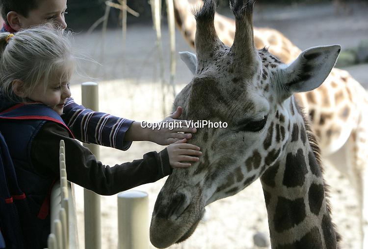 Foto: VidiPhoto..RHENEN - In het kader van Werelddierendag kregen de dieren in Ouwehands Dierenpark in Rhenen extra aandacht van verzorgers en bezoekers. Kinderen, winnaars van de LIGAventure, mochten in de dierenverblijven van de olifanten, ijsberen en tijgers voedsel verstoppen, zodat de dieren konden gaan 'schatzoeken'. Ook de giraffen kregen een extra knuffel.