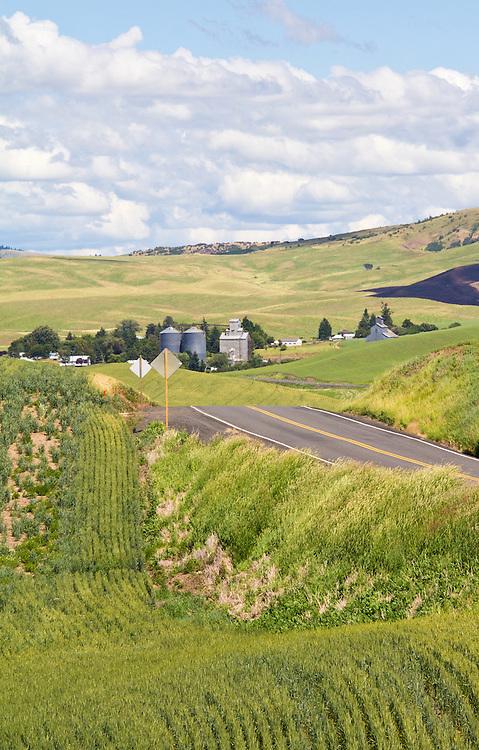 Palouse, wheat fields, spring wheat, farm fields, State Route 195, Whitman County, Eastern Washington, Washington State, Pacific Northwest,