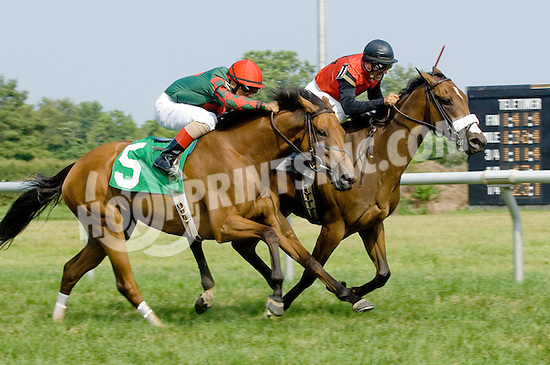 Citron Lady winning at Delaware Park on 7/4/12