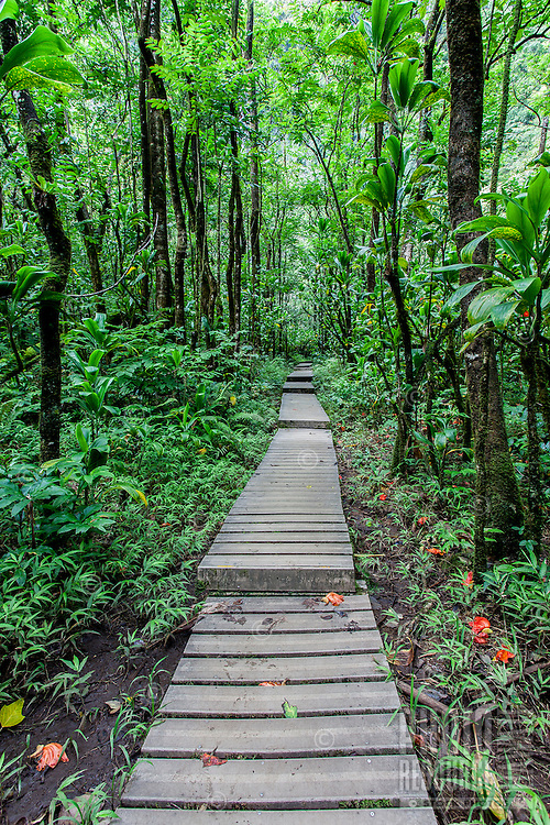 Trail leading through thick forest, Pipiwai hiking trail, Haleakala National Park, Kipahulu, Maui