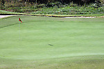 A green with a red flag and sandtrap on a golf course during the fall season in Branson Missouri