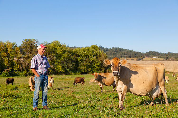 Portrait of Bob Bansen, a dairy farmer in Yamhill, Oregon, standing in the pasture with his herd of organic Jersey milk cows.