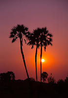 Makalani Palm Sunset at Palmwag Concession in Namibia