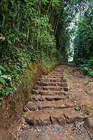 Uphill steps on the trail to Manoa Falls, Honolulu, O'ahu.