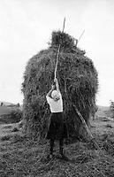 ROMANIA / Maramures / Valeni / July 2003. .Maria Nemes makes a haystack. In the summer, peasants work 12-16 hour days harvesting hay completely by hand...© Davin Ellicson / Anzenberger