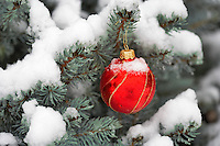 Christmas tree ornament on snow covered tree.