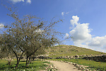 Israel, Shephelah, Tel Zafit, identified as Biblical Gath, one of the ancient Canaanite and Philistine five cities (along with Gaza, Ekron, Ashkelon, and Ashdod)
