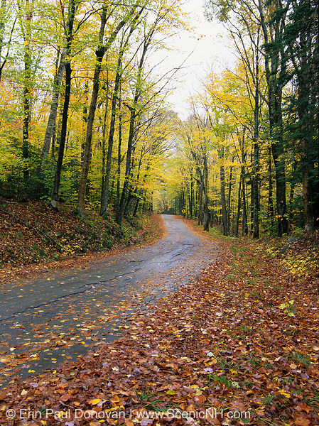 Autumn foliage along Mount Clinton Road in Crawford's Purchase, New Hampshire. Completed in 1901, the Mount Clinton Road is the southern division of the Jefferson Notch Road. Built in 1901-1902, in two sections, the purpose of the Jefferson Notch Road was to connect the Crawford House with Jefferson Highlands.