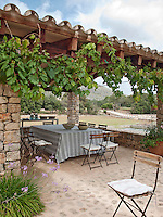 A grape vine grows over the side of the covered terrace