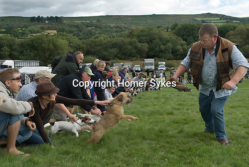 Widecomb Fair Widecombe in the Moor Dartmoor Devon Uk. Terrier racing. A fake foxe's tail is used as the bate, attacked to a piece of strink, the terriers chase it.