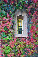 Windows with fall colored ivy at Talbert Winery. Napa Valley, California