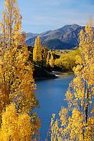 Lake Wanaka Image | Autumn poplar trees next to Lake Wanaka, South Island, New Zealand<br /> <br /> NO NEW ZEALAND SOUVENIR OR POSTCARD LICENCING PERMITTED