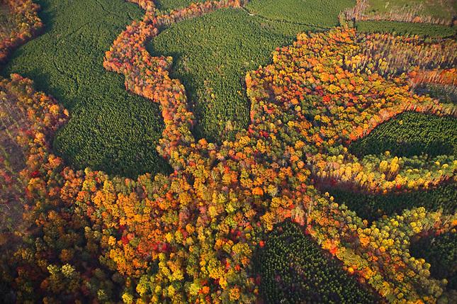 Autumn Colors Jasper Mountain