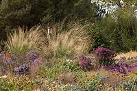 Sporabolus wrightii (giant Sacaton) and birdhouse Prairie garden meadow; Scripter garden, Colorado; design Lauren Springer Ogden