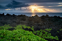 Naupaka plant, and sunrise from Waiananappa Trail. Black Sand beach. Maui, Hawaii