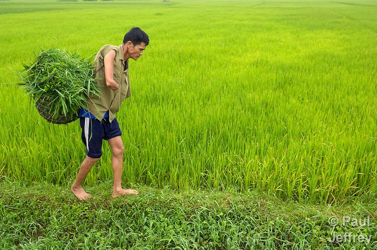 Work attitude in vietnam