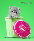 Xavier, ANIMALS, REALISTISCHE TIERE, ANIMALES REALISTICOS, cats, photos+++++,SPCHCATS780B,#a#