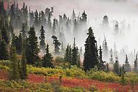 Morning fog over the tundra and boreal forest, Denali National Park, Interior, Alaska.