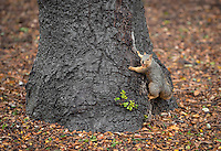 Squirrel in the Academic Quad, Dec. 22, 2015.<br />