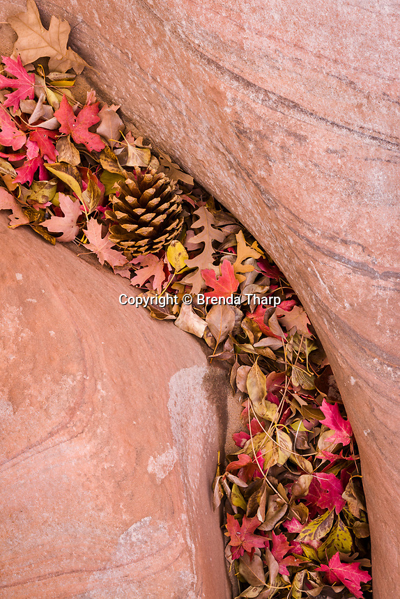 Leaves and pine cones pile up in a channel carved through stone, Zion National Park, Utah.