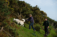 Pictured: Co-owner dean Tweedy (L) with and Ieuan Howells looking for the lynx near at Borth Wild Animal Kingdom (formerly Borth Animalarium) , Ceredigion Wales UK. Monday 30 October 2017<br /> Re: The search continues for Lillith, a juvenile European Lynx, (latin name Lynx Lynx) which escaped from its enclosure at Both Wild Animal Kingdom.  A police helicopter with thermal imaging cameras spotted the animal  in undergrowth near the zoo in the  3early evening yesterday, raising hopes that the creature has gone to ground close to its home
