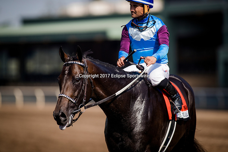 ARCADIA, CA - JUNE 03: Bolo and Corey Nakatani after the Shoemaker Mile Stakes at Santa Anita Park  on June 03, 2017 in Arcadia, California. (Photo by Alex Evers/Eclipse Sportswire/Getty Images)