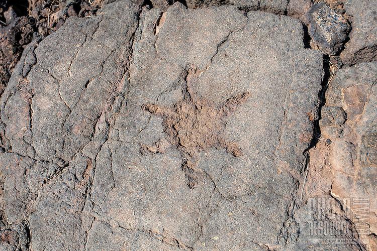 A petroglyph or ki'i pohaku at the Waikoloa Petroglyph Field (a.k.a. 'Anaeho'omalu Petroglyph Field), Big Island.