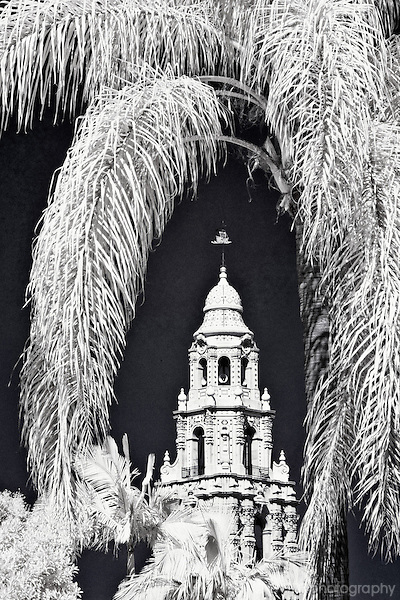 Infrared image of southwestern architecture framed by a palm tree.