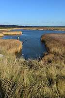 Farlington Marshes Nature Reserve near Portsmouth, Hampshire