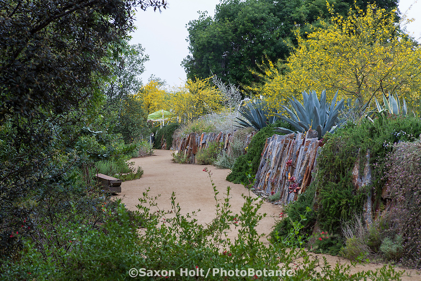 Dirt path through drought tolerant, dry, South West garden; Los Angeles Natural History Museum
