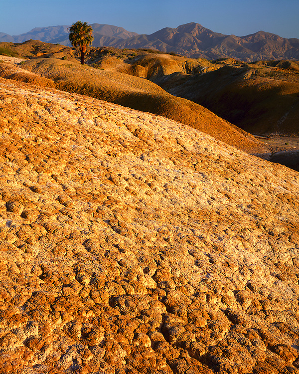 Morning light on a palm tree and an eroded field; Anza Borrego Desert State Park, CA
