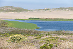 Point Reyes National Seashore, California; sand dunes at the mouth of Abbotts Lagoon