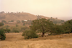 Oak Trees on golden hillside near Hollister, California