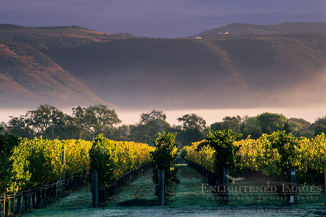 Hills and morning fog at sunrise over vineyards near Oakville, Napa Valley, Napa County, California