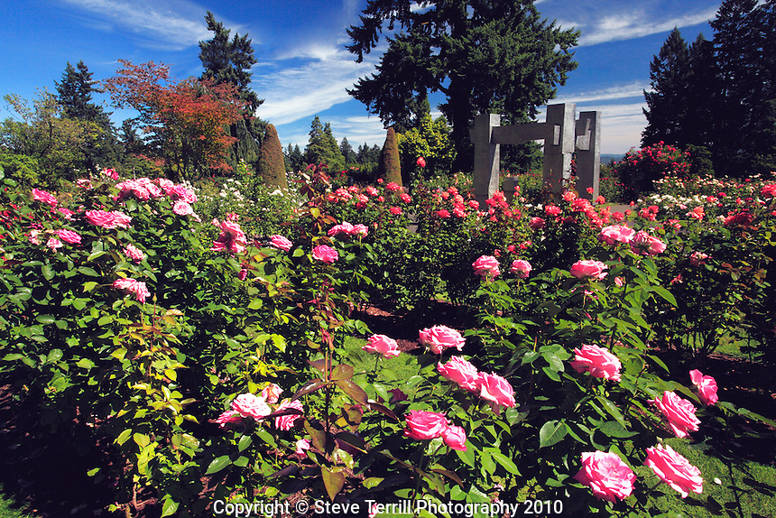 Portland International Rose Test Gardens in Washington Park in Portland,Oregon