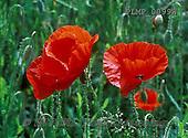 Marek, FLOWERS, BLUMEN, FLORES, photos+++++,PLMP0099W,#f#
