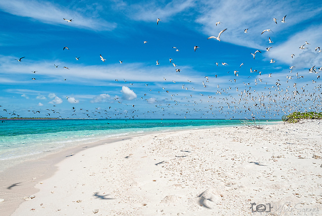 Cook Island bird sanctuary Christmas Island(Kiritimati), Kiribati