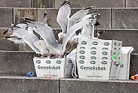 Meeuwen eten afval op straat