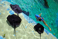 A snorkeler swims with brown stingrays at Sea Life Park aquarium; Makapuu, Windward Oahu