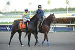 03-29-19 Gulfstream Park Stakes