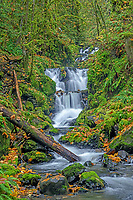 ORCG_D202 - USA, Oregon, Columbia River Gorge National Scenic Area, Emerald Falls on Gorton Creek in autumn with fallen leaves and and moss covered rocks and trees.