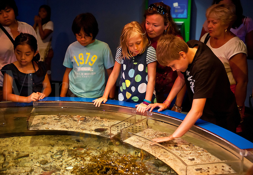 Kids touch marine life at a touching tank, Mystic Aquarium, Mystic, Connecticut, CT, USA