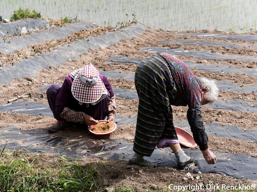 S&auml;en von Gem&uuml;se bei Gyeongju, Provinz Gyeongsangbuk-do, S&uuml;dkorea, Asien<br /> Sowing of vegetables near Gyeongju,  province Gyeongsangbuk-do, South Korea, Asia