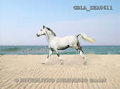 Bob, ANIMALS, collage, horses, photos(GBLASEA0611,#A#) Pferde, caballos