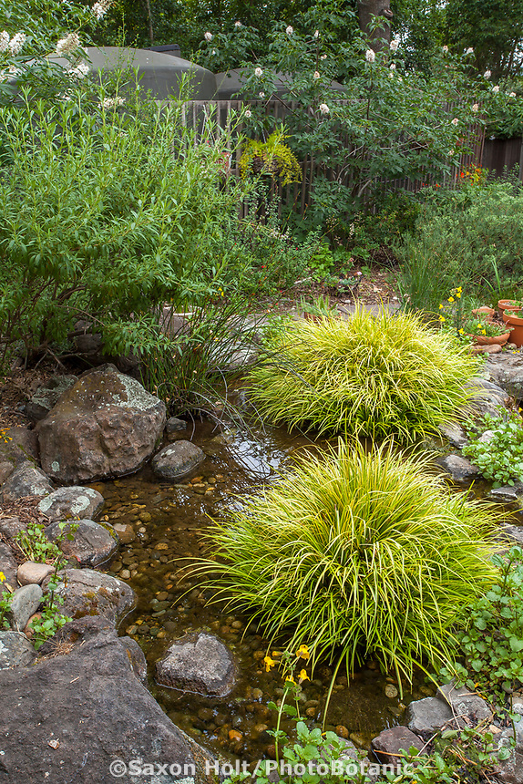 Backyard pond filled with water harvested from roof stored in cisterns, edged with stone and grasses; Judy Adler Garden, Walnut Creek, California