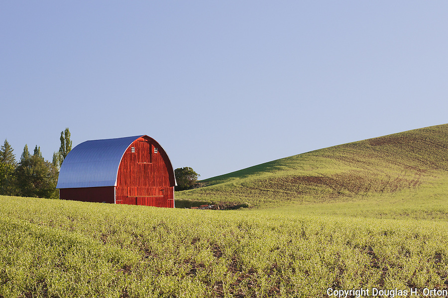 Scenic Palouse Hills with red barn in lentil fields.  Palouse region, Washington State.