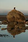 Homer, Alaska Beach Scene with eagle.