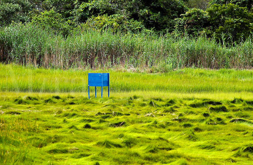 Greenhead horse fly box trap commonly used to control the pest in Cape Cod salt marshes. Cape Cod, MA