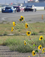 Cars race past wildflowers during practice for this weekend's Grand-Am Rolex series race at Miller Morosports Park in Tooele, UT on Friday, September 18, 2009.  (Photo by Brian Cleary/www.bcpix.com)