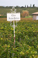 Vineyard. Clos Saint Julien, Saint Emilion, Bordeaux, France